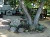 Shady Rock Garden