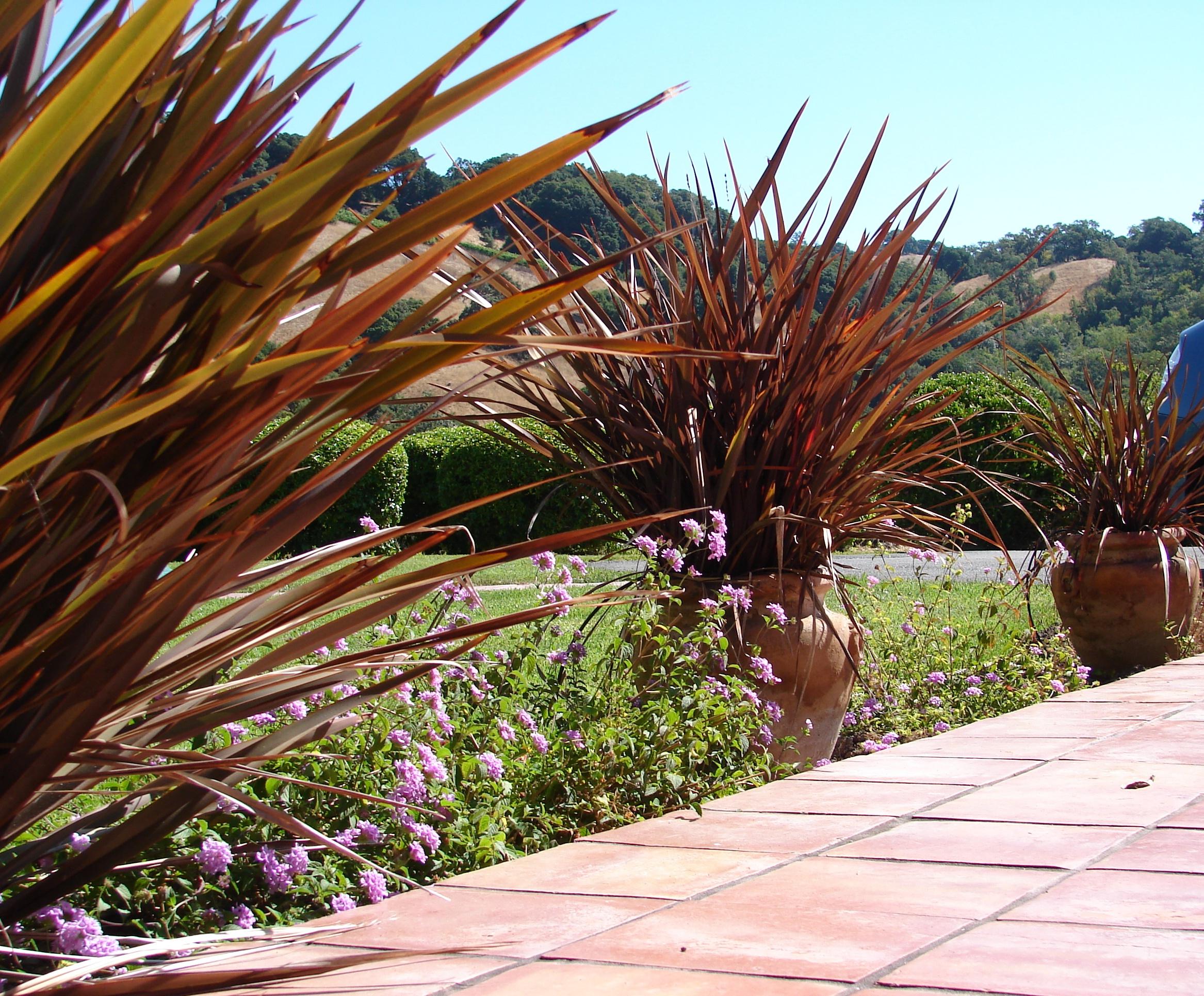 Testimonials for Eve Werner | Eve\'s Garden Design - Native, Edible ...