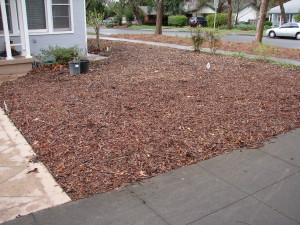 Sheet Mulching: Brown is the New Green
