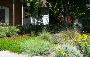 A Native Rich Garden Save A lot of Water
