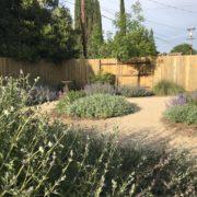 Drought tolerant plants line decomposed granite pathways