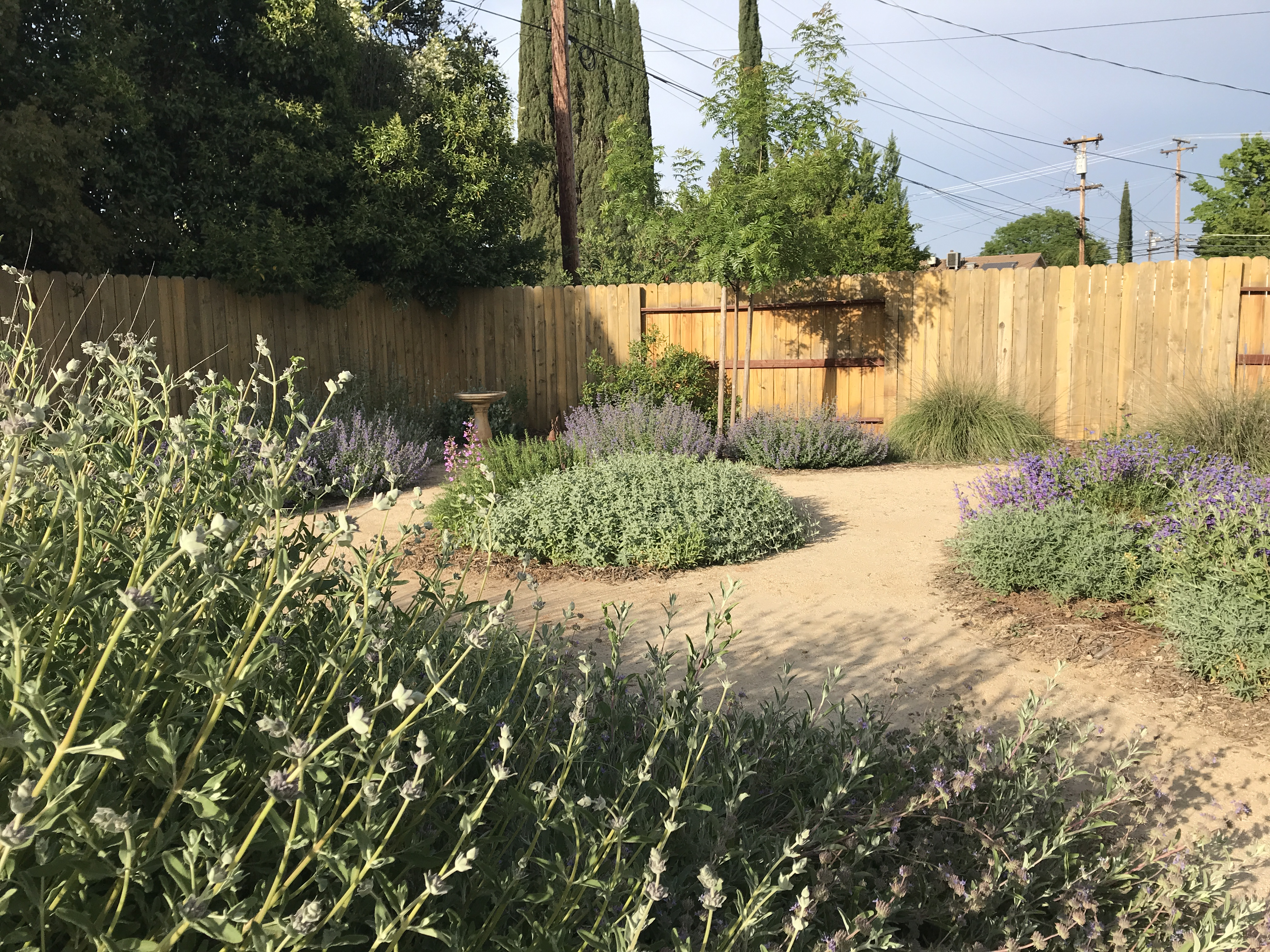 Drought tolerant plants line decomposed granite pathways
