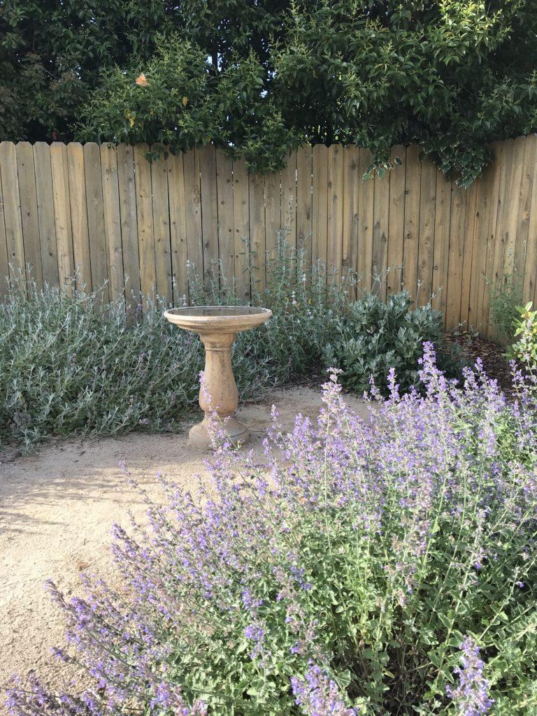 pollinators need water