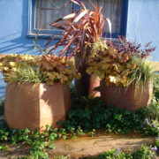 low maintenance container gardening