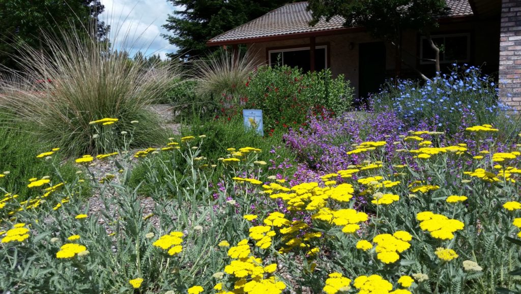 perennials with contrasting color and texture